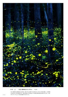 ほたる Narrative Photography, Glow Paint, Japan Landscape, What A Wonderful World, Beautiful Landscapes, Wonders Of The World, Fantasy Art, Northern Lights, Scenery