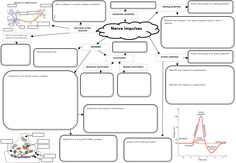 This is a great template for Concept Maps on nerves. Get your students to complete it for revision!