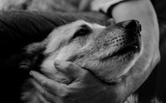 A recent study by the American Journal of Preventive Medicine reveals that animal rescue workers have a suicide rate of 5.3 in 1 million workers. This is the highest suicide rate among American workers; a rate shared only by firefighters and police officers. The national suicide average for American workers is 1.5 per 1 million.