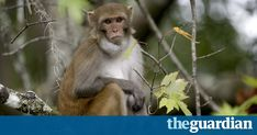 Wildlife agency says free-roaming monkeys at state park are a public health concern, as 30% may have Herpes B that can spread to visitors via bodily fluids