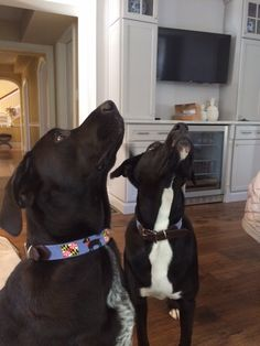 Chubb and Briar-2 of our best customers! needlepoint dog collars