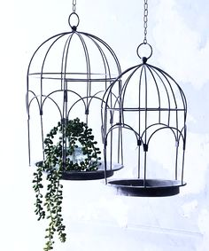 A quirky display for hanging plants - our birdcage plantholders come in two sizes The large one has a hinged door the smaller one doesn t Each cage