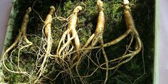 Top 5 Health Benefits of Panax Ginseng - From memory to infertility. Increase your brain function and memory. Panax Ginseng must be in your health arsenal. Best Korean Food, Korean Diet, Ginseng Plant, Ginseng Tea, Super Dieta, Maca Pulver, Korean Red Ginseng, Food For Glowing Skin, Vegetables