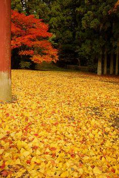 紅葉狩り 高野山 Autumn leaves in Koyasan, Wakayama Autumn Day, Autumn Trees, Autumn Leaves, The Beautiful Country, Beautiful World, Wonderful Places, Beautiful Places, Mellow Yellow, Orange Yellow