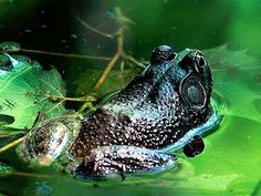 Frog Photos Most Beautiful Colourful Frogs Pictures Ever