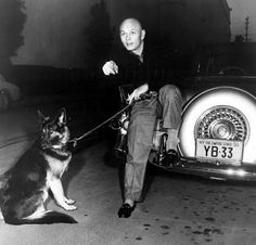 Yul Brenner & his GSD                                                                                                                                                                                 More
