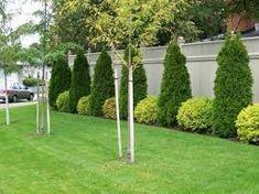 Картинки по запросу landscaping along fence