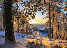 Photographie du jour #250 : Winter Morning Finland