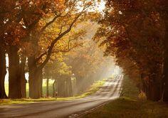 autumn sun by Tobias Zeising on 500px