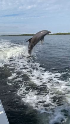 way to end a fishing trip with dolphins playing on the way in. Water Animals, Animals And Pets, Funny Animals, Beautiful Creatures, Animals Beautiful, Wale, Ocean Creatures, Beautiful Fish, Tier Fotos