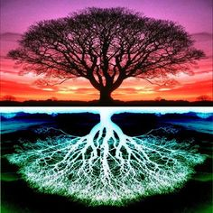 Why Grounding with the Energy of Earth Is Important for Your Well-Being ~ RiseEarth
