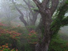Forest path джунгли, Природа, forest path, лес, длиннопост