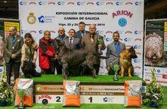 Vale más una imagen que mil palabras.  El podio de #Vigo con los ganadores.  Enhorabuena.  #exposicioncanina
