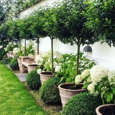 If you are looking for Small Garden Design Ideas, You come to the right place. Below are the Small Garden Design Ideas. This post about Small Garden Design Ideas. Backyard Garden Design, Diy Garden, Backyard Fences, Front Yard Landscaping, Fence Garden, Landscaping Design, Backyard Privacy, Garden Borders, Boxwood Landscaping