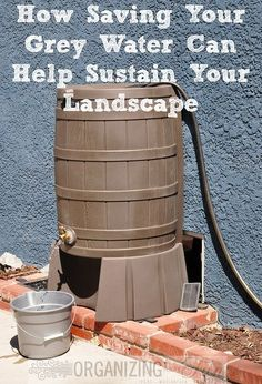 When we build our littler house, laundry gray water will drain to a landscape water barrel.