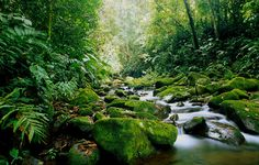 Costa Rica- must see the rich forests and the amazing biodiversity.