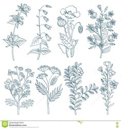Herbs wild flowers botanical medicinal organic healing plants vector set in hand drawn style. Herb medicine plant and illustration of botanical plant for healing Illustration Blume, Botanical Illustration, Wildflower Drawing, Plant Vector, Flower Sketches, Ink Pen Drawings, Ecole Art, Desenho Tattoo, Plant Drawing