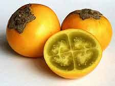 Lulo...the most delicious fruit there is!