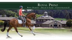 Royal Prinz (Royal Diamond - Dream of Glory) 2001 Oldenburg stallion available for breeding through Hilltop Farm, Inc. For additional information visit www.hilltopfarminc.com #stallion #oldenburg #breedingstallion #dressage