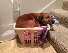 Bliss helping her foster mom do laundry