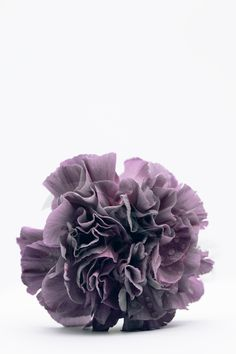 Printable Botanical Photography, Carnation #art #print #digital #white #etsy #flowers #vertical #purple #printable #botanical Flower Photography, Nature Photography, Poster Size Prints, Art Prints, International Paper Sizes, Types Of Flowers, Body Tattoos, Carnations, Printing Services