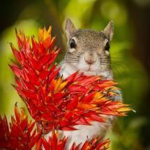 Just a squirrel @ Chris Johnson