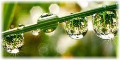 abundance-in-nature