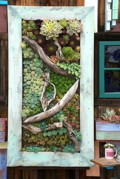 Gorgeous vertical garden!now then it is the time for vertical gardens