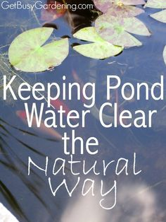 Keep Pond Water Clear Naturally (And Get Rid Of Pond Algae) During the summer, algae growth can be a huge problem in garden ponds. The great news is that there is an easy way to keep pond water clear without using expensive chemicals. Pond Algae, Design Fonte, Pond Cleaning, Outdoor Ponds, Outdoor Fountains, Goldfish Pond, Turtle Pond, Diy Pond, Pond Fountains