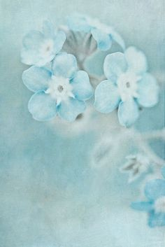 By Onelia Pena Galvez, beautiful blues and textures.  http://www.flickr.com/photos/oneliapg_photography/
