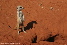 Weekend Travel Inspiration: A Typical Day on A Safari Family Vacation - FamiliesGo!
