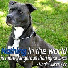 *** Question ***    What's more dangerous?    Pitbulls? ....... Ignorance?  http://www.facebook.com/pages/Pit-Bulls/341602392571586
