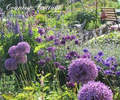 09-Mai+-+Welcome+to+my+May+Garden+-+IMG_4288.JPG (1600×1339)