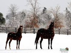 Image result for winter horse wallpaper