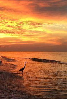 Beautiful sunset on the gulf coast Orange Beach Alabama, Gulf Of Mexico, Beautiful Sunset, Sunrise, Coast, Outdoor, Outdoors, Outdoor Games, The Great Outdoors