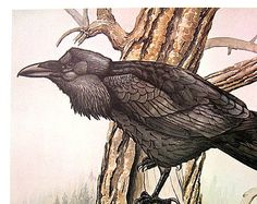 Rex Brasher Print - Large Vintage 1962 Bird Print - Yellow Billed Magpie with Plane Tree and Common Raven