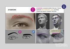 Anatomy for Sculptors / Human Atlas 360 | On Animation