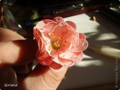 sakura (part two: the flowers)