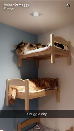 Snuggle city. #catmemes #wallmountedcatbed #funnycats HOW CUTE!!! Our cats loved cat shelves when we had them. I've seen beds like these at IKEA in the toy section.