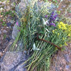 Esto sí que son flores del campo