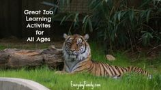 Zoo Learning Activities