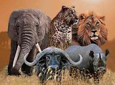 Africa's Big Five. Ultimate hunters challenge: to kill all five. On my bucket list. Elephant, Lion, Leopard, Black Rhino, and Cape Buffalo.