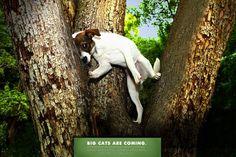 Zoo ads