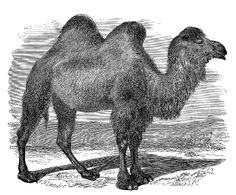 *The Graphics Fairy LLC*: Vintage Clip Art - Lovely Camels