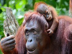 Animal Primates Black Lemur Primates Wallpapers HD 1080p. Primates ...