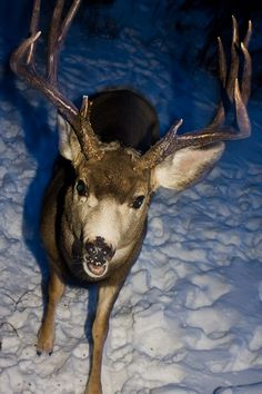 Too much of a buck close up!