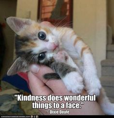 Kindness does wonderful . . .   Dixie Doyle