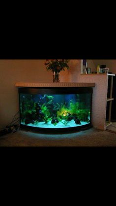 """Fish tank """"place"""" minus the fire?"""