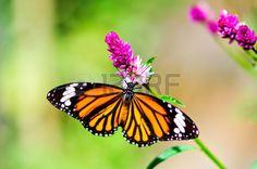 tropical butterfly in garden