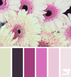 gerbera hues (design seeds)
